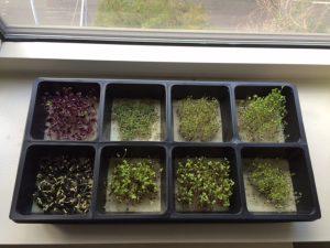 growingmicrogreens.com hydroponic starter kit