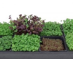 Bring the Outdoors In With Window Herb Gardens