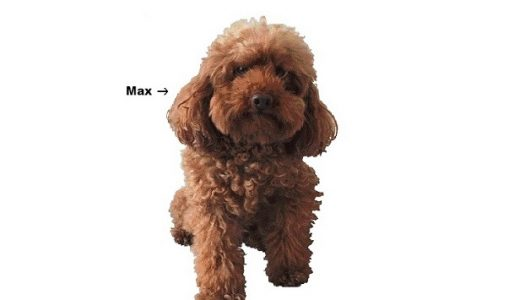 Max, Lucy, Duke… Why Pets Are Good For Your Health
