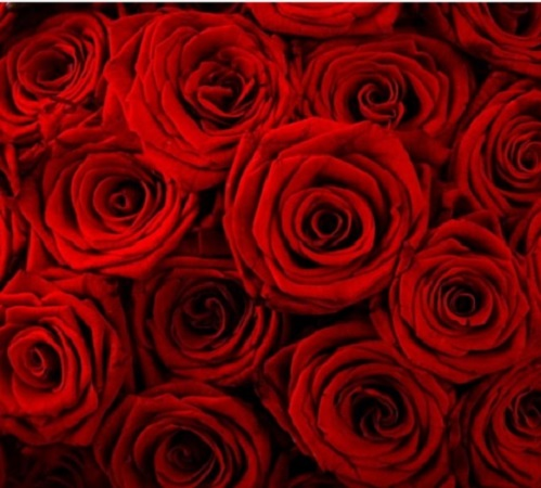 roses image 500x450