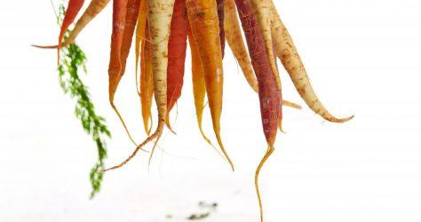 gabriel-gurrola-57458.carrots
